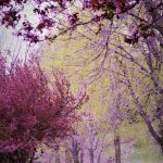 Spring trees